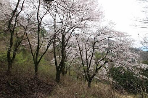 yamanokami009.jpg